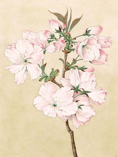 Ariake - Daybreak - Vintage Japanese Watercolor Print By Just Eclectic