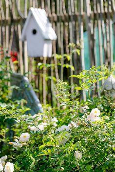 Sichtschutz oder unkonventionelle Rankhilfe DIY • Pomponetti Wall Trellis, Garden Deco, Rustic Gardens, Fence, World, Outdoor Decor, Diy, House, Inspiration
