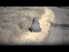 Cuando Este Bebé Elefante Colapsa A Lado De Su Mami, Nunca Me Imaginé Que Hiciera Esto - #animales, #Entretenimiento, #Humor, #Vida, #Video  http://www.vivavive.com/bebe-elefante/