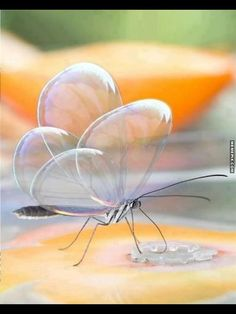Beautiful butterfly bubble wings. - MemePix