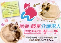 ロゴのモデル?になった猫は 尾張・岐阜介護求人サーチの キャリアアドバイザーの飼っている ラグドール(Ragdoll)の  「もなか」くん  2019年1月18日生まれの♂ Gifu, Aichi, Care Worker, Gray Aesthetic