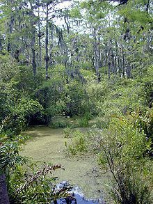 swamp vine - Google Search Vines, Country Roads, Mountains, Nature, Plants, Travel, Google Search, Naturaleza, Viajes