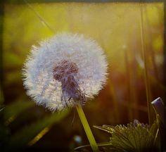 Summer memories (6), via Flickr.
