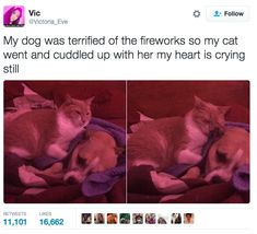 This wonderful friendship: | 17 Tweets Every Cat Person Needs To See