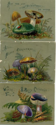 Victorian mushroom Christmas cards. Because mushrooms are so Christmas.