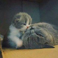 """I luv you mamma""...kiss kiss kiss"