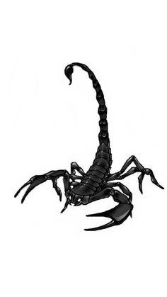 70 Best Scorpion Wallpaper Images Scorpion Wallpaper Scorpio