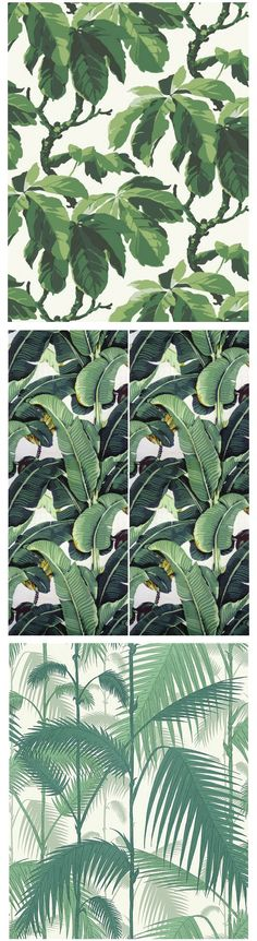 "Borastapeters Oxford Martiniques Beverly Hills Wallpaper by Cole & Sons ""Palm Jungle"""