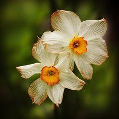 🌸 FLOWER   &   MACRO 🔎 (@ir_flowers_macro) • Fotos y vídeos de Instagram