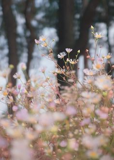 ideas for plants photography nature wild flowers Fall Flowers, Pretty Flowers, Summer Flowers, Romantic Flowers, Tiny Flowers, White Flowers, Pink Nature, Nature Plants, Flower Aesthetic