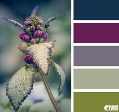 Colour Pallette, Color Palate, Colour Schemes, Color Combos, Color Patterns, Paint Schemes, Good Color Combinations, Nature Color Palette, Decoration Palette