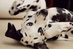 i am so dizzy, I am seeing spots