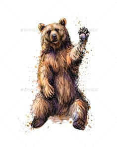 Buy Friendly Brown Bear Sitting and Waving a Paw From by kapona on GraphicRiver. Friendly brown bear sitting and waving a paw from a splash of watercolor, hand drawn sketch. Bear Paw Tattoos, Grizzly Bear Tattoos, Grizzly Bear Drawing, Ours Grizzly, Tattoo Bunt, Bear Sketch, Tableau Pop Art, Bear Watercolor, Animal Illustrations