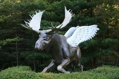 Flying Moose, Rockwood, Me. Greenville Maine, Whitewater Rafting, Pine Tree, Get Outside, Monuments, Vermont, Statues, New England, Moose