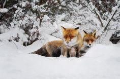theanimalblog:      Wildlife Photography: Dennis Binda