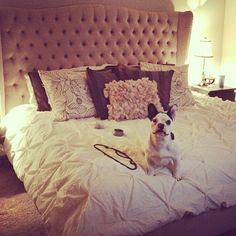 Instagram pup @likothefrenchie gets comfortable on our Jameson Bed.