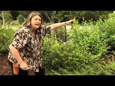 ▶ How to Prune Ilex crenata - Instructional Video w/ Plant Amnesty - YouTube