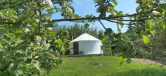 Cider Orchard, Ragmans Lane Farm, Gloucestershire. Not only a yurt in an orchard but a cider orchard with cider thrown in.