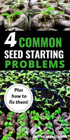 Vegetable Gardening Ideas: Is your seed starting failing? Check out these 4 common problems AND how to fix them Vegetable Gardening Ideas: Is your seed starting failing? Check out these 4 common problems AND how to fix them Hydroponic Gardening, Hydroponics, Container Gardening, Vegetable Gardening, Indoor Gardening, Veggie Gardens, Gardening Hacks, Gardening Quotes, Indoor Herbs