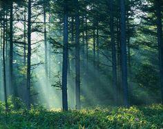 Bellas forest