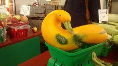 Duck Pumpkin