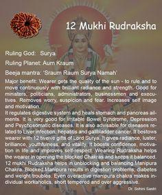 12 Mukhi Rudraksha..