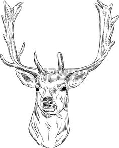 vector - portrait fallow deer isolated on background