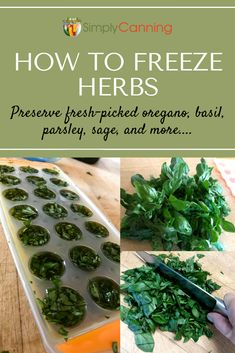 Freezing Herbs: Cilantro, Basil, & Oregano, This Guide Covers It All! Learn all about freezing herbs in ice cube trays with water or olive oil! Enjoy those yummy flavors all winter long with help from Freezing Cilantro, Freezing Fresh Herbs, Preserve Fresh Herbs, Freezing Vegetables, How To Freeze Herbs, Freezing Basil, Frozen Vegetables, Fresh Basil Recipes, Herb Recipes