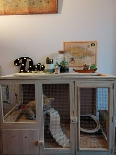 Discover recipes, home ideas, style inspiration and other ideas to try. Rabbit Hutch Indoor, Rabbit Hutch Plans, Rabbit Hutches, Indoor Rabbit Cages, Diy Bunny Hutch, Diy Bunny Cage, Bunny Cages, Cage Hamster, Pet Cage