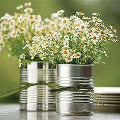 Hmmm... what if I were to plant daisies in the cans?  How long would they take to grow?