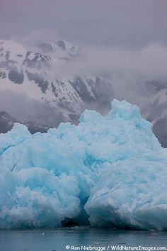 Iceberg from Aialik Glacier, Kenai Fjords National Park, Alaska