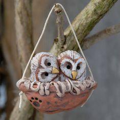 Baby Schleiereulen Nussbaum nest