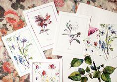 """다음 @Behance 프로젝트 확인: """"Watercolor flowers"""" https://www.behance.net/gallery/34936255/Watercolor-flowers"""