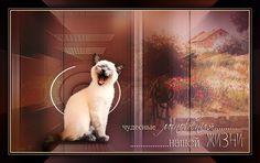 Тема и материал от Екатерины (Cafe de Paris) Animals, Animales, Animaux, Animal, Animais