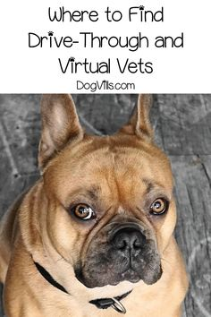Want to know where to find drive-through and virtual vets? Read on for tips and recommendations for both options, plus things to consider before using them.