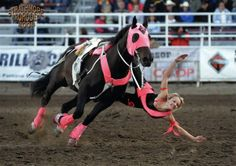 amber graham trick riding, one of my favorite moves! Western Riding, Horse Riding, Horse Girl, Horse Love, Trick Riding, Rodeo Life, Westerns, Black Horses, Horse Pictures