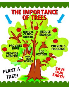 Make a Importance of Trees Poster | Arbor Day Poster Ideas