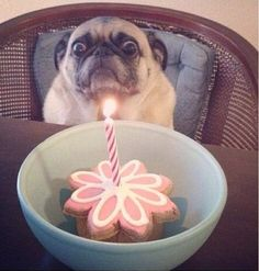 birthday cake for you