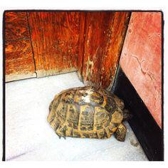 Kapıdaki misafir!
