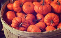 Pumpkins - Optimised for the Retina display - 2880 x 1800