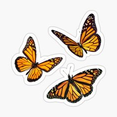 'monarch butterfly sticker pack orange' Sticker by Katie's S.- 'monarch butterfly sticker pack orange' Sticker by Katie's Stickers - Tumblr Stickers, Phone Stickers, Journal Stickers, Cool Stickers, Printable Stickers, Star Stickers, Printable Planner, Orange Butterfly, Monarch Butterfly