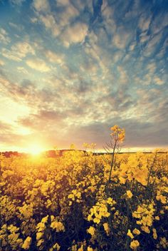 This picture is gorgeous! Outdoors flowers clear sky and sun shine makes me a happy girl