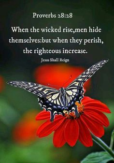 ❤*❤*❤ Jesus Reigns, Whatsoever Things Are True, Proverbs 28, To Loose, Inspirational Message, Powerful Words, Gods Love, Bible Verses, Philippians 4