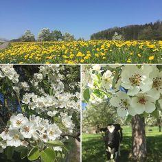 #beautiful #nature #blüten #blütenzauber #blauerhimmel einfach #genial und jetzt #herbalife24 #herbalifenutrition - www.nuuproducts.ch