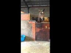 This Horse Is All About That Bass And Can Probably Dance Better Than You