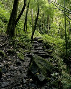 path to waterfall at Hana, Maui, Hawaii