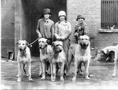 The Ladies Kennel Association Championship Dog Show at Olympia on the left, Joan Southey with Crewkerne Georgie and Margot of Clonard, centre Phyllis Strohmenger with Jospehine and on the right Barbara Strohmenger with Gabriel. Circa 1935.