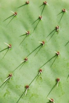 Cactus   Photograph by Fred Lahache