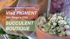 Visit Pigment: San Diego's Chic Succulent Boutique