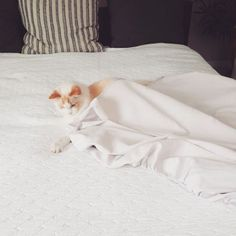MOOD // Sunday bed making. Our cat thinks he is helping us make our organic bedding.